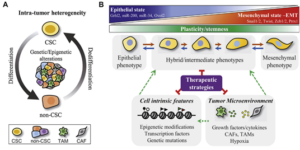 Figure 6 Cancer cell plasticity Impact on tumor progression and therapy response [12]