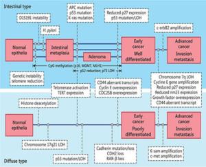 Figure 7 The Yasui Tahara multistep model of molecular pathogenesis of gastric cancer 25
