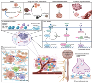 Figure 8 Summary of cell plasticity models [22]